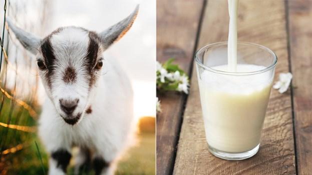 Người mắc bệnh tim nên uống sữa nào?